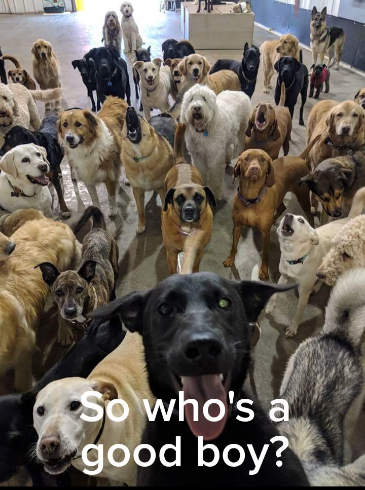 Dog Squad 3