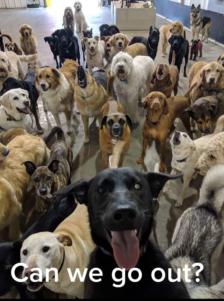 Dog Squad 4