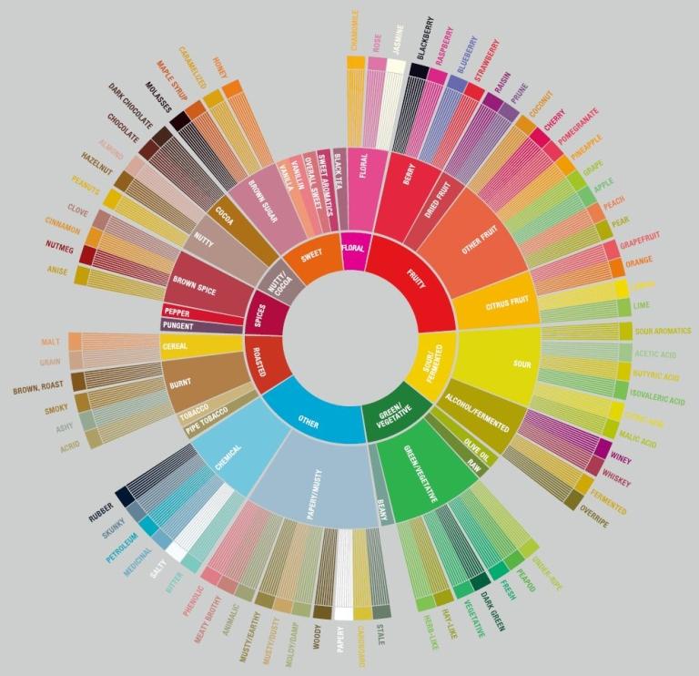 SCA Flavor Wheel